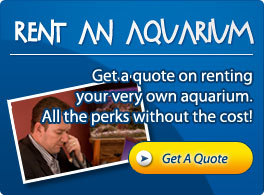 Aquariums Alive Gold Coast - Rent Aquariums