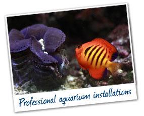 Aquarium Installations Gold Coast