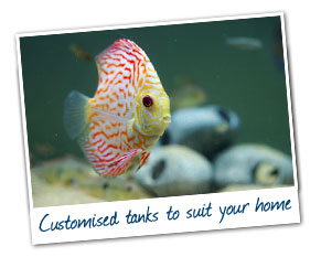 Aquarium Maintenance Gold Coast