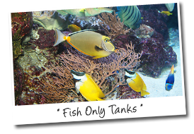Fish Only Aquariums